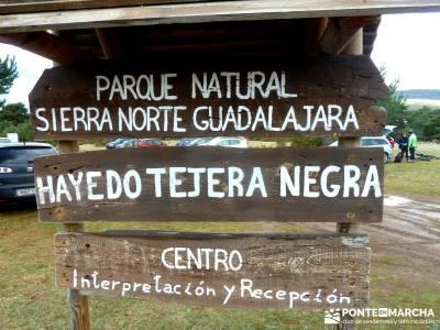 Hayedo Tejera Negra - Fiesta Almudena;zona norte madrid integral de la pedriza